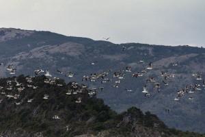 birds-migration