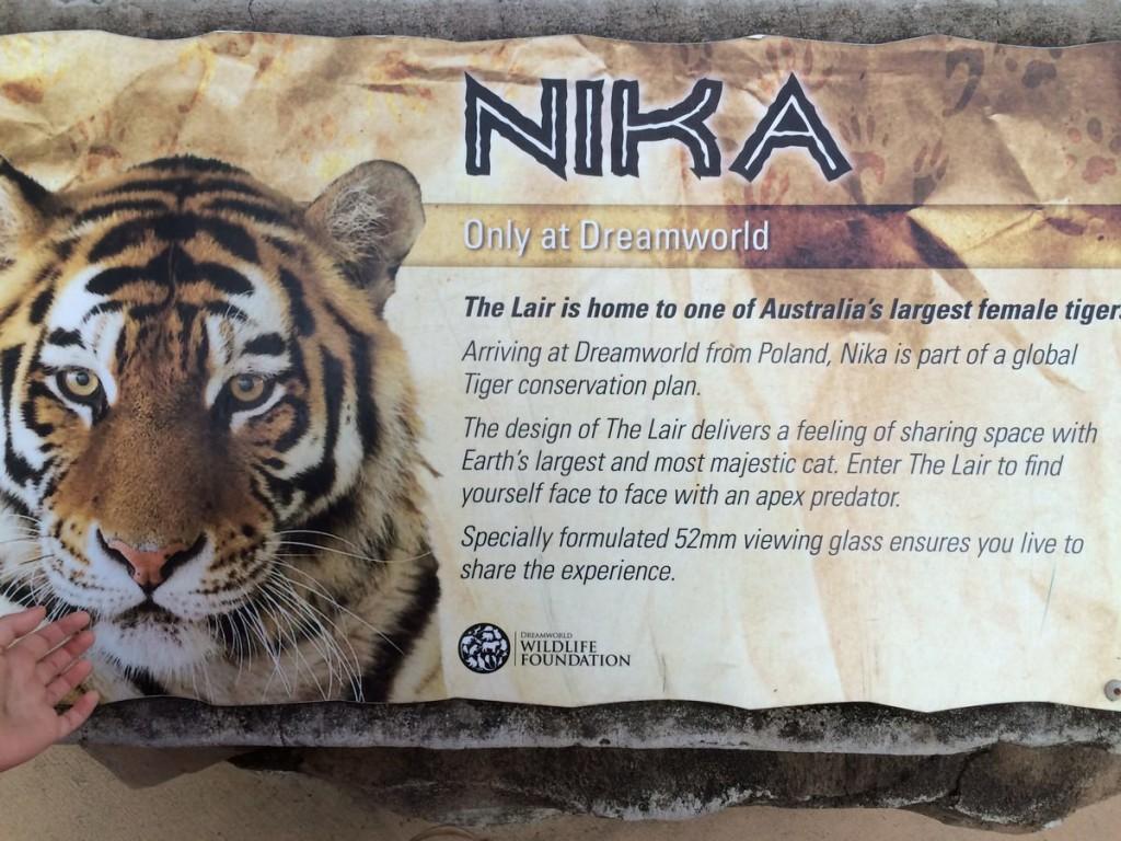 nika-polski-tygrys-w-australijksim-zoo